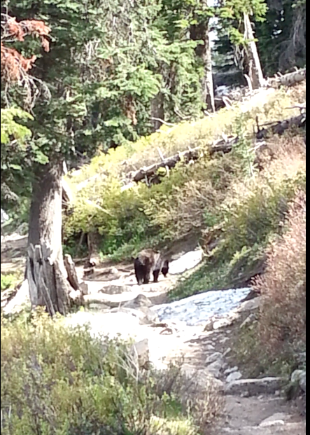 Not so great shot of our little bear friend.